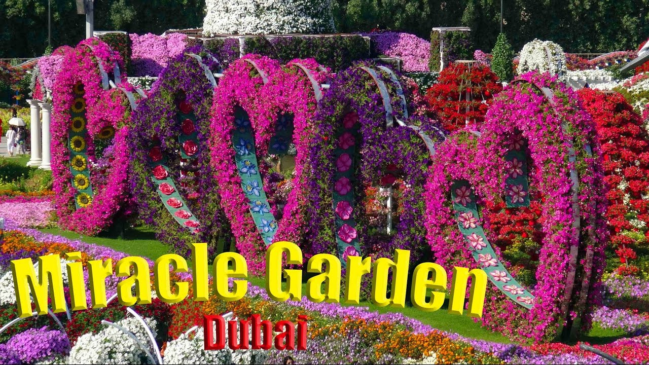Dubai Miracle Garden Visit 4k Youtube