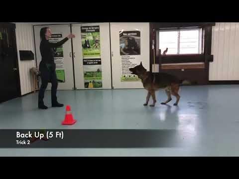 Advanced Tricks dog Chief's - DMWYD