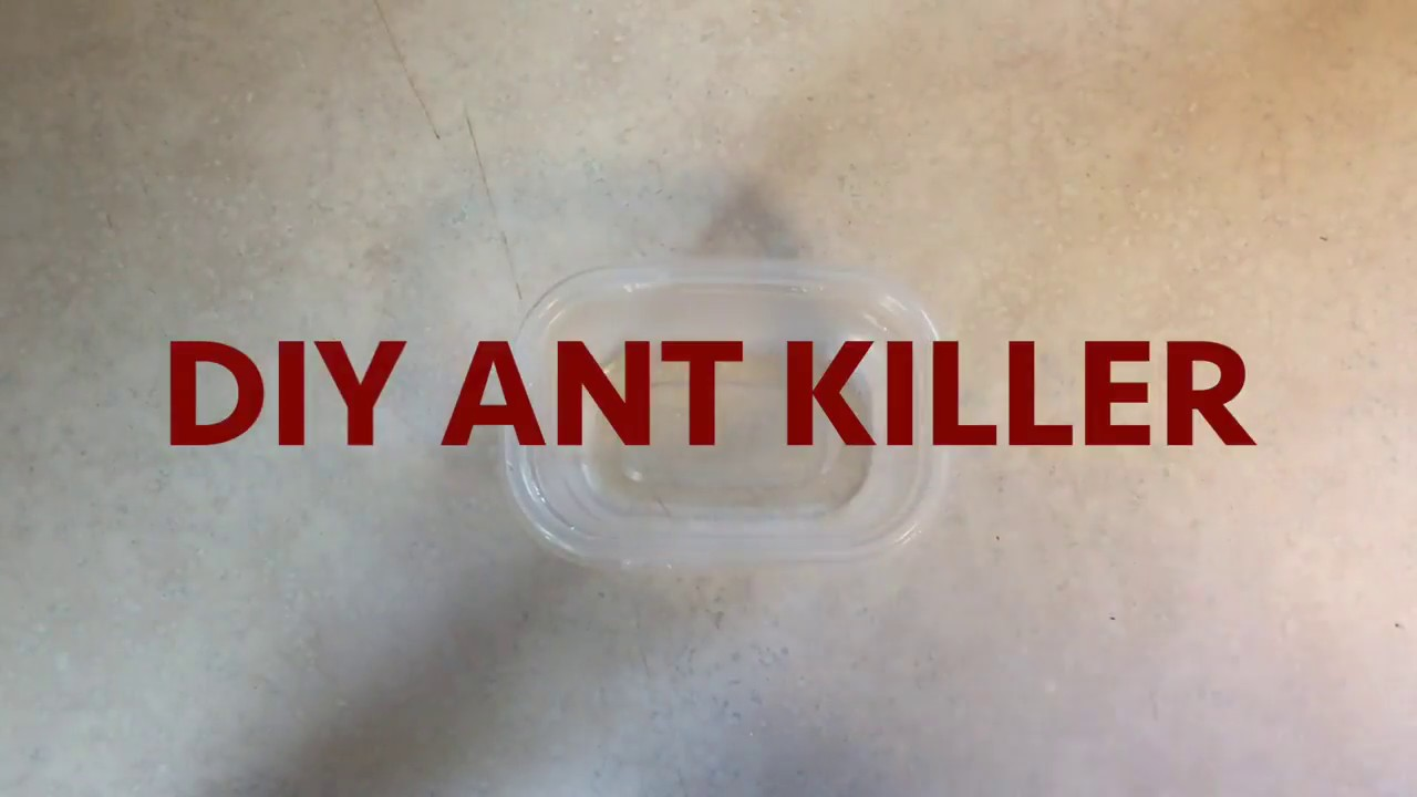 Homemade Ant Killer Using Borax