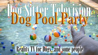 Dog Pool Party (Reality TV for Dogs)  Please Subscribe