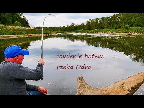 Bat i jego możliwości. Rzeka Odra. Łowienie z ostrogi. Kleń, leszcz. Cz 2