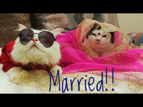 hamba-as-groom-&-puchi-as-bride!-#cute_cat_couple-#cute_cat