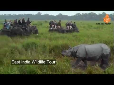 East India Wildlife Tour by Indo Asia Tours