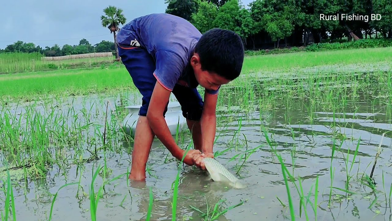 WOW! Amazing Hand Fishing | Traditional Village Boy Catching Fish By Hand in Rainy Water