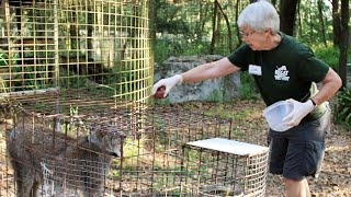 Volunteer's Arm at Carole Baskin's Sanctuary Nearly Cut Off