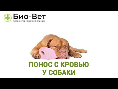 Вопрос: Симптом чего много сукровичной слизи после опорожнения у пса?