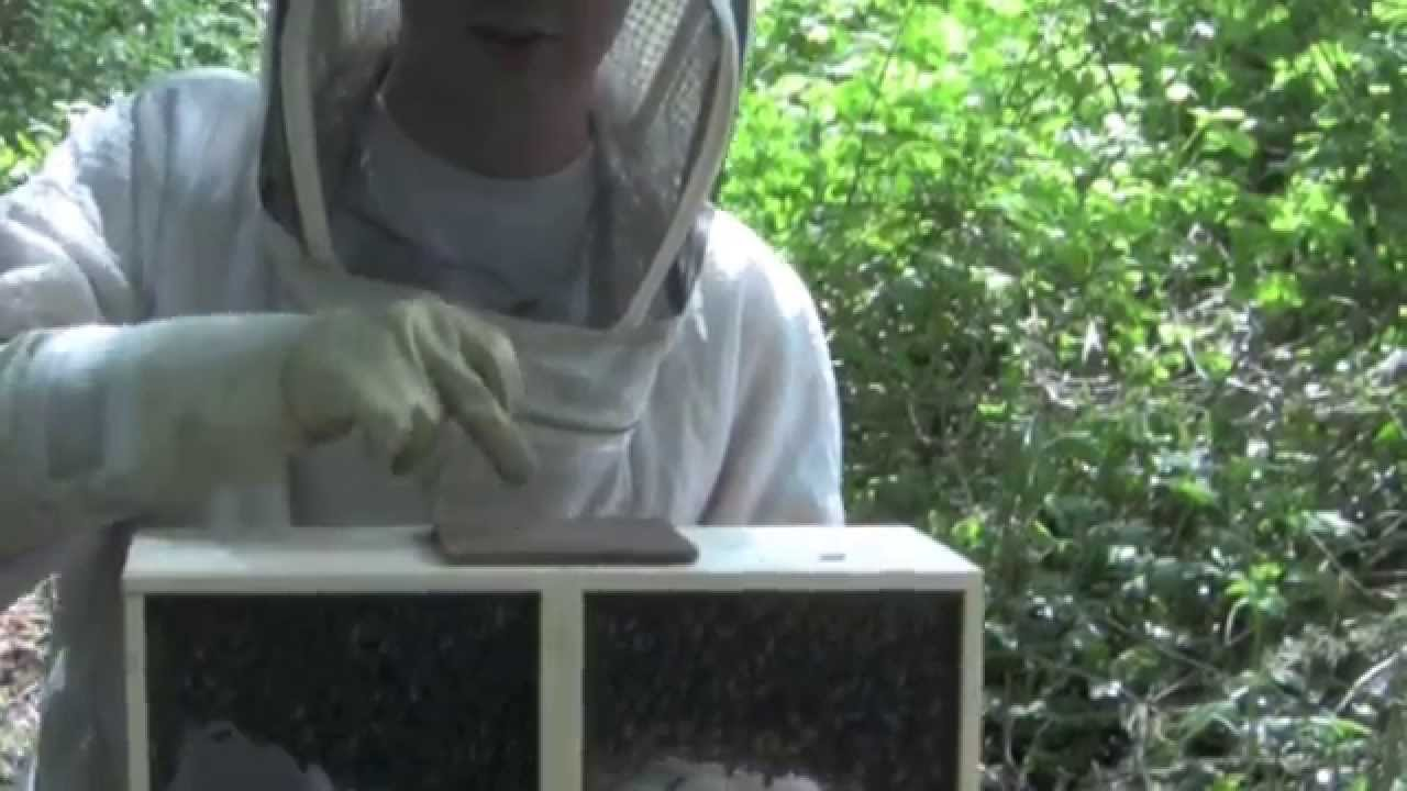 How To Install A Package Into A Top Bar Hive. Bee Thinking