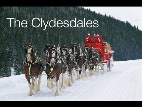 The Budweiser Clydesdales of Merrimack, New Hampshire
