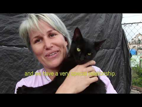 Volunteers Rescuing Kittens and Puppies in Cuba