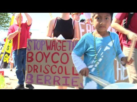 Driscoll's Workers Call for Global Boycott over Alleged Abuses at World's Biggest Berry Distributor