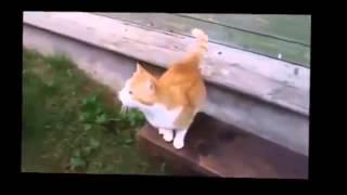 УМОРА!! Кошки!Смешные!2013