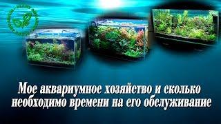 Мое аквариумное хозяйство и сколько необходимо времени на его обслуживание