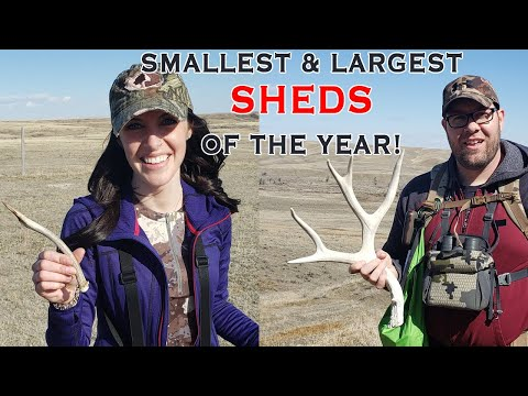 Shed Hunting 2021 - Piles of Muley Sheds! The SMALLEST and LARGEST Finds of the Year!