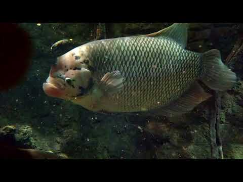 ZSL London Zoo | Aquarium (5)