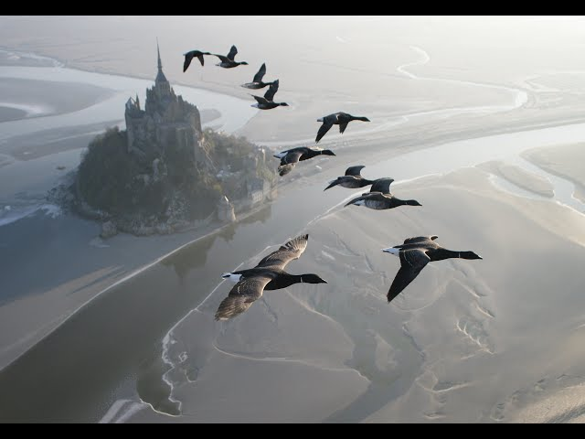 Amazing fligts with birds on board a microlight. Christian Moullec avec ses oiseaux