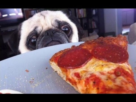 Simple Pizza Makes Dogs Forget About Morals