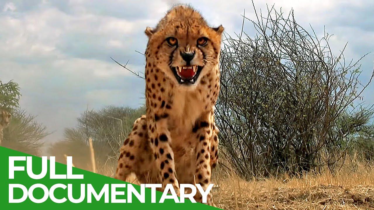 Masai Mara - The Big Hunt | Free Documentary Nature