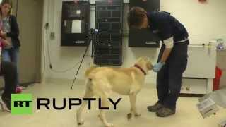 Usa: Cancer-sniffing Canines Are A Patient's New Best Friend