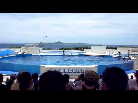 沖繩美麗海水族館(Okinawa Churaumi Aquarium)海豚表演(Dolphin Show)  20100622_115927.m2ts