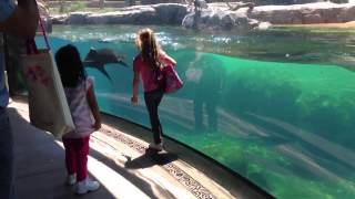Little Girl and Sea Lion play tag. Sea Lion worried about Little Girl. ORIGINAL VIDEO