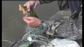 Рыбалка сетями, на день рыбака