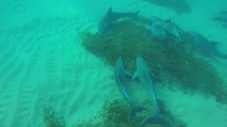 Wild Dolphin Tummy Tickle