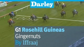 Gingernuts by Iffraaj wins the G1 Rosehill Guineas