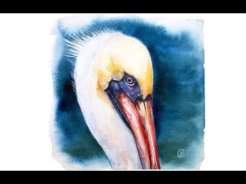 Watercolor Pelican Painting Tutorial