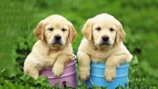 Cách nuôi chó con và cách huấn luyện chó con khoa học - Thức ăn cho chó thumbnail