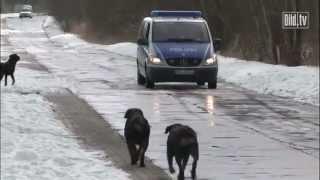 Polizei-Panne: Rottweiler umzingeln Polizei-Auto und lassen Diebe ziehen