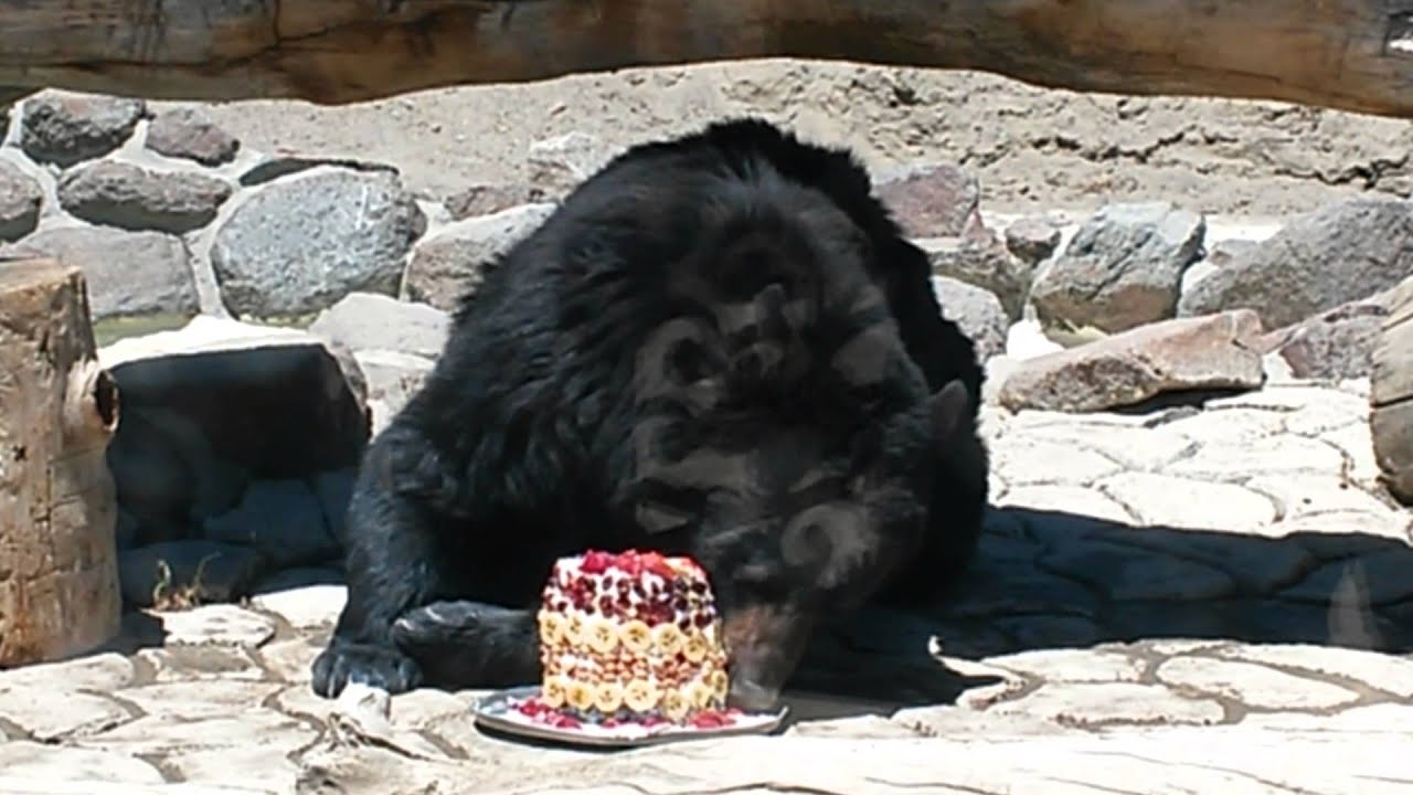 Bear Eating Watermelon Cake Youtube