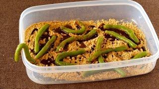 Shiratama Worms for Halloween (Mochi Recipe) ハロウィンに白玉ワーム (ミミズ) の作り方 - OCHIKERON - CREATE EAT HAPPY