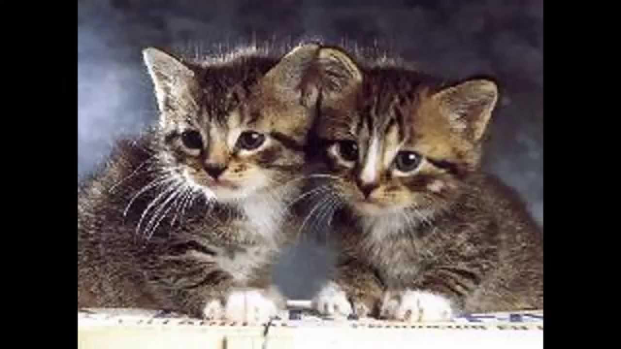 Les chat les plus mignon du monde youtube - Photo chat mignon ...