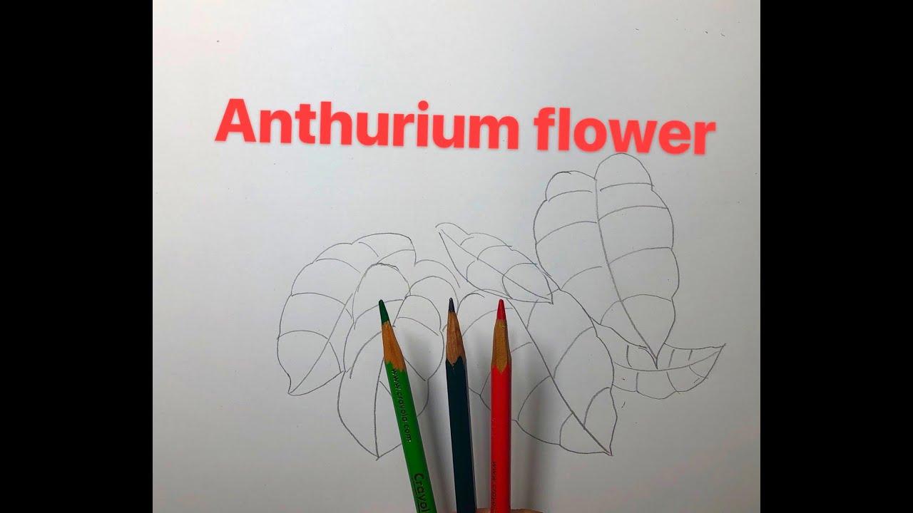 Anthurium flower: symbolizes grand vision, passion and passion.红掌花:象征着大展宏图、热情、热血.NO:133.Sep18, 2020