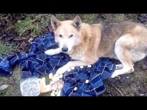 Батайский Хатико: Собака ждала у калитки умершего хозяина
