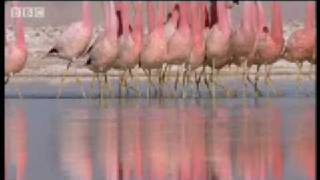 Massive volcanoes & Flamingo colony - Wild South America - BBC