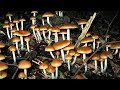 Taking Magic Mushrooms with Bipolar Disorder (My Thoughts & Experience)