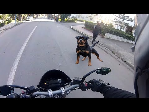 Angry Dogs Vs BIKERS 🌟 DOGS ATTACKED MOTORCYCLE 🌟 BEST Compilation 2017