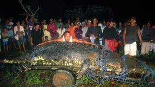 Lolong the World's Largest Crocodile found in the Philippines