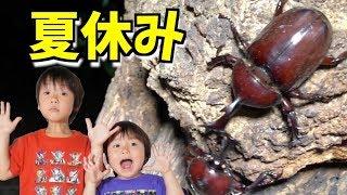 夏休み!田舎で大量のカブトムシを発見!昆虫採集 このチャンネルはだー...