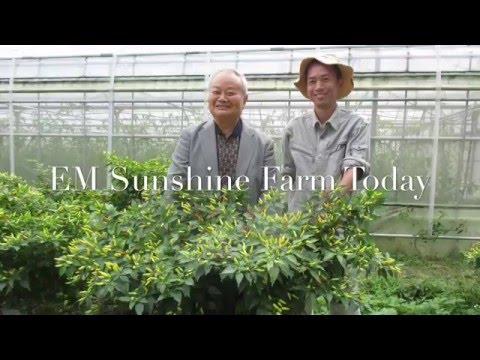 Sunshine Farm in Okinawa