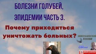 Болезни голубей эпидемии Почему приходиться убивать больных