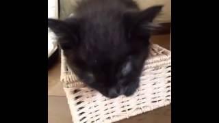 生後一ヶ月弱の黒猫の赤ちゃん.
