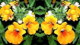 видео Иксора уход и выращивание из семян в домашних условиях