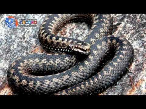 В Хасавюрте от укуса змей пострадали три человека
