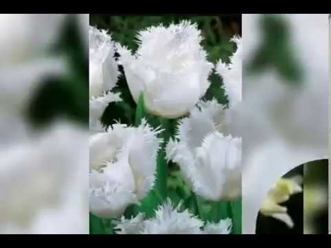 Most Beautiful White Flowers Youtube