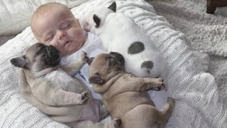 面白 - おもしろ - この眠っているブルドッグの子犬は夢の中で最も夢が...