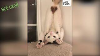 смешные видео про котов Смешные кошки Funny Cats 2019