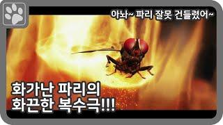 [영화리뷰] 화가 난 파리의 화끈한 복수극 // (나는파리다, 인도영화)