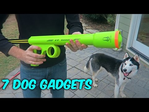 Thumbnail: 7 Dog Gadgets Put to the Test